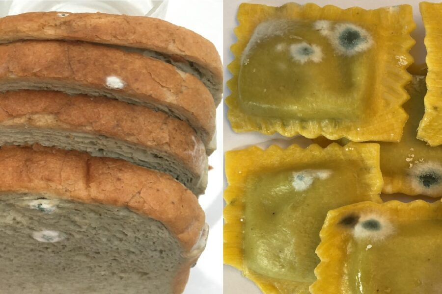 THE MOLD ON THE BAKERY FOOD AND PASTA